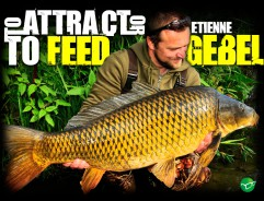 Baiting Strategies - Etienne Gebel