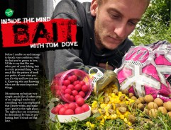Dove On Bait - Tom Dove