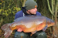 Carp don't come much better looking at than this