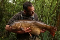 A fantastic Shillinglee common