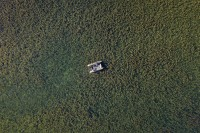 The vast amount of weed
