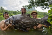 Gillhams is home to some absolute monster Siamese carp