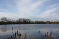 Linear Fisheries Manor