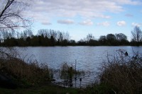 Deep, murky but full of lovely carp