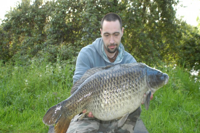 A lovely, grey common caught early on in my session