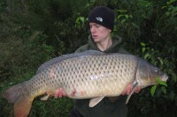 34lb of German common