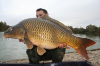 Look at the sleek lines of this forty-pound common