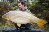 A sleek, stunning common for Nico