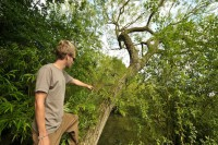 Using trees (safely) will help you gain a great vantage point