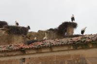 They went exploring and found nesting storks
