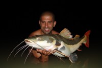 Another monster Red Tail Catfish