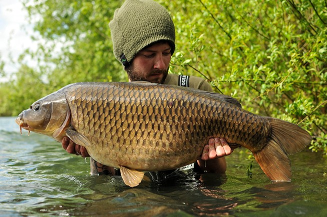 A 30b common for Elliott