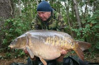 Huge carp like this 50lb-plus mirror