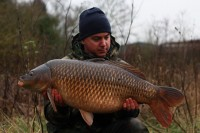 A pre-Christmas 29lb common