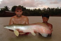The first Arapaima
