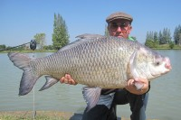 The largest carp in India