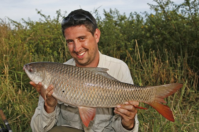 Rohu or Indian carp