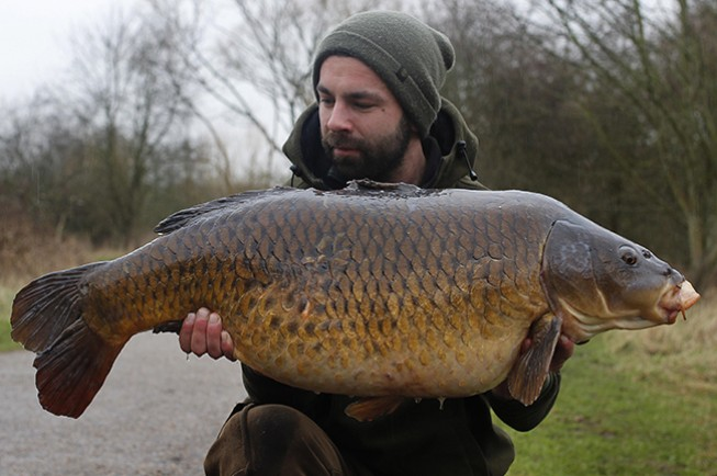 Stunning 35lb 8oz common