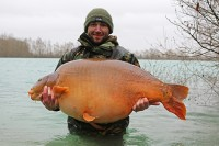 Biggest fish in Gigantica