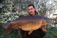 The magnificent big common from Bovington