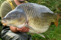 What a stunningly proportioned carp