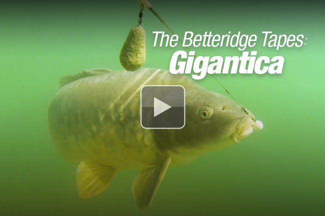 Ed's video blog from Gigantica!