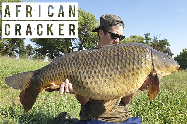 Big South African common for Brandon Frazer!